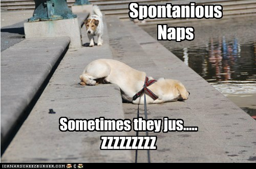 dogs stairs naps nap attack zzzz what breed - 6766310656