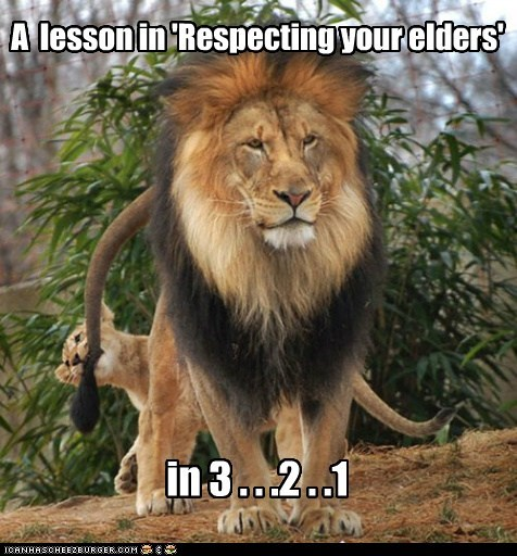biting,lions,countdown,cub,respect your elders,3 2 1,tails