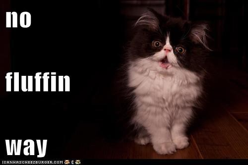 swear no way curse captions saying no Cats - 6766413312