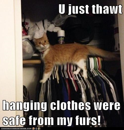 U just thawt  hanging clothes were safe from my furs!
