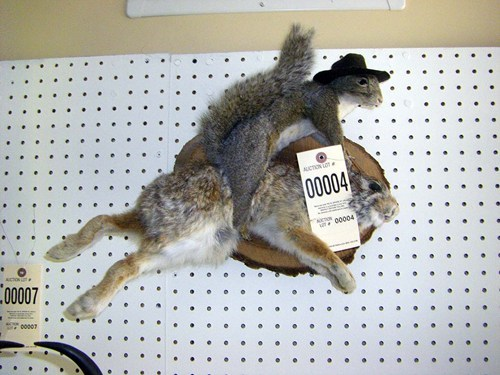 squirrel,giddy up,taxidermy,riding,rabbit