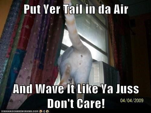 Put Yer Tail in da Air  And Wave It Like Ya Juss Don't Care!