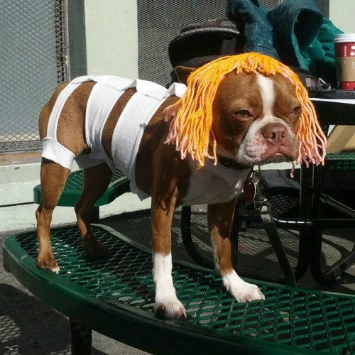dog costumes the fifth element leeloo - 6766742528
