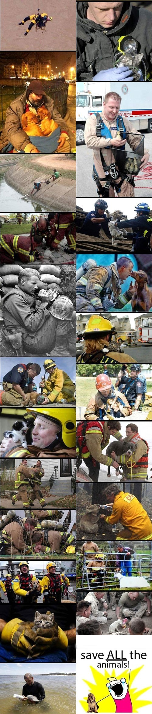 dogs heroes firefighters heartwarming ducks koalas all the things Memes Cats animals rescue - 6766841088