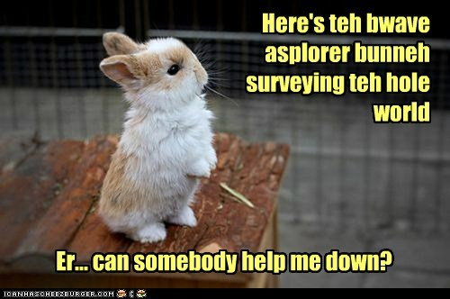 brave,surveying,scared,help,explorer,up high,bunny