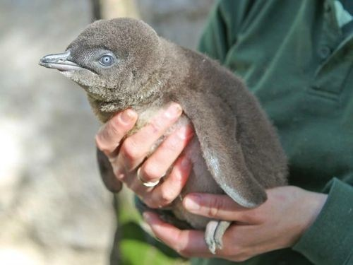 floof baby squee spree penguin squee - 6766936832