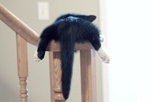 cyoot kitteh of teh day kitten bannisters stairs butts tails Cats - 6767143424