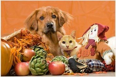 cyoot kitteh of teh day dogs kitten thanksgiving Interspecies Love Cats