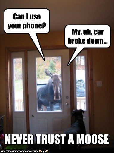 Can I use your phone? My, uh, car broke down... NEVER TRUST A MOOSE
