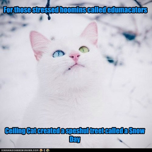 For those stressed hoomins called edumacators Ceiling Cat created a speshul treet called a Snow Day