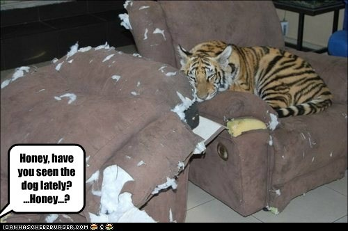 furniture,tigers,torn up,eating,dogs