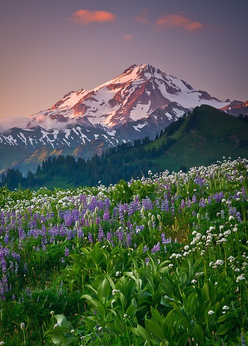 glacier,landscape,glacier peak,pretty colors,mountain