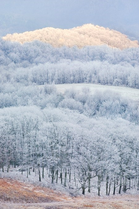 Forest,snow,hills,landscape,winter