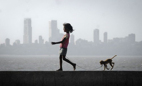 cityscape mumbai pet monkey Hall of Fame best of week - 6767645184