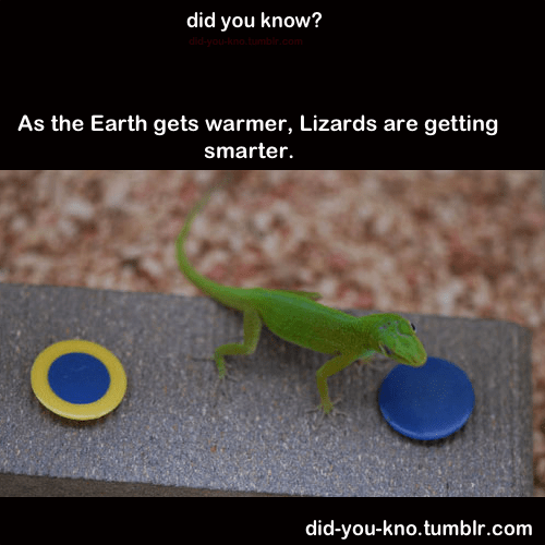 lizards,getting smarter,real facts,earth