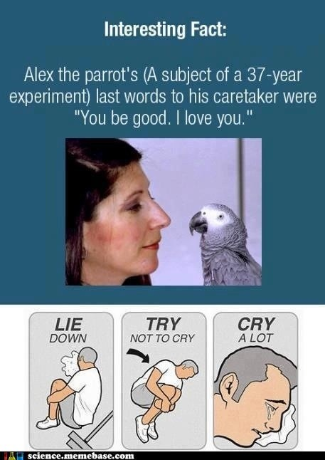 Sad,fact,feels,parrot