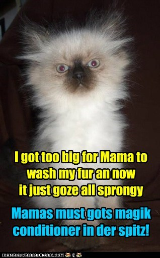 I got too big for Mama to wash my fur an now it just goze all sprongy Mamas must gots magik conditioner in der spitz!