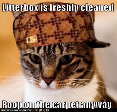 Litterbox is freshly cleaned  Poop on the carpet anyway