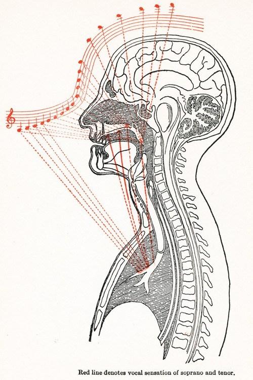acoustics,vocals,notes