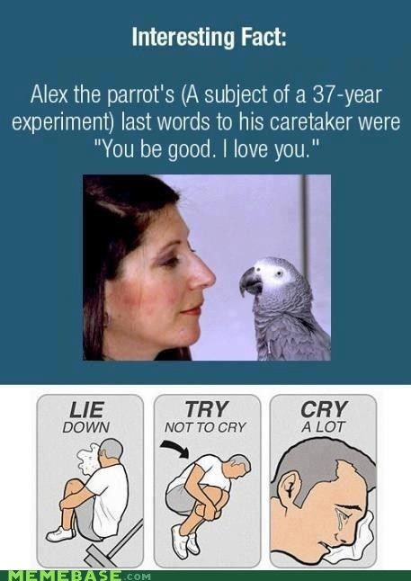 birds,Death,romance,tears,crying,parrot,Sad,facts,alex the parrot,sweet,feels