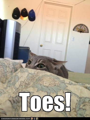 toes,bed,attack,sheets,captions,Cats