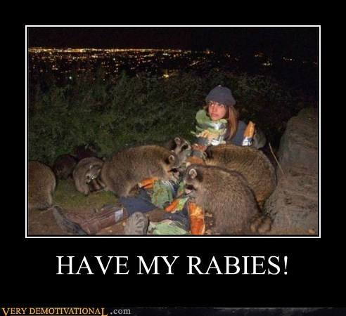 wtf,rabies,raccoon,animals