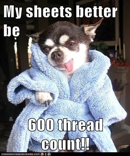 My sheets better be  600 thread count!!