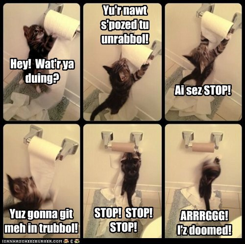 captions,toilet paper,bathroom,toilet,Cats