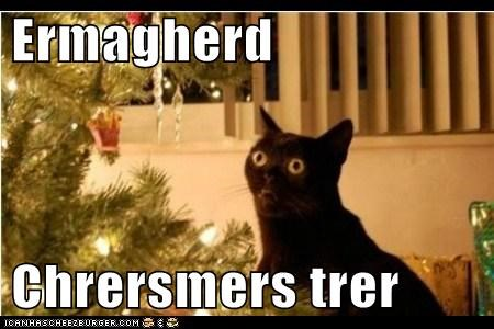 cat,Ermahgerd,christmas tree