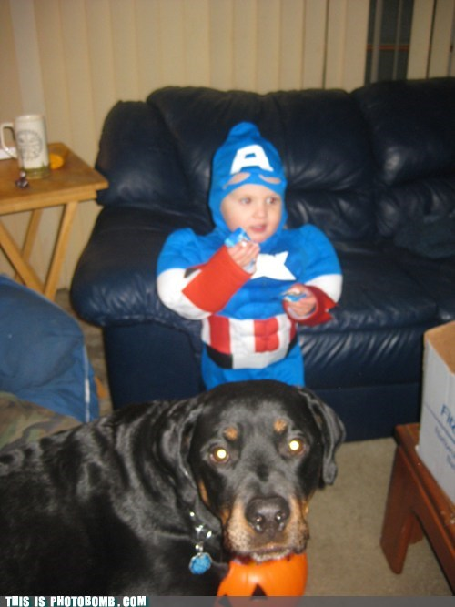 costume,dogs,captain america,animals