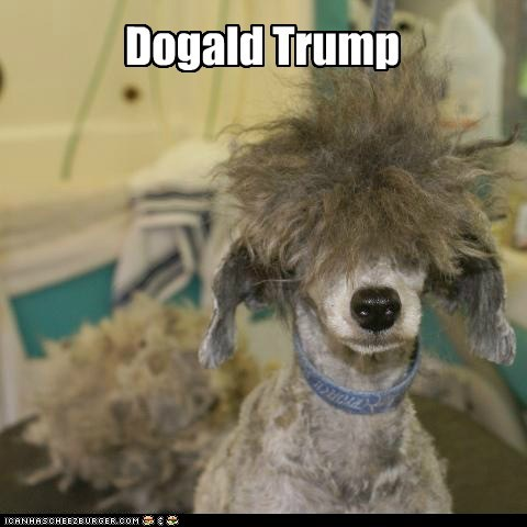 dogs donald trump bad hairdo what breed comb over