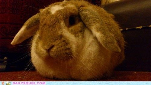 Bunday reader squee pet rabbit bunny squee
