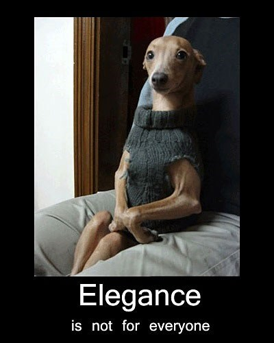 fancy,dogs,human-like,sweaters,captions,elegance,not for everyone