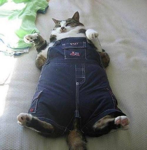 cat,overalls