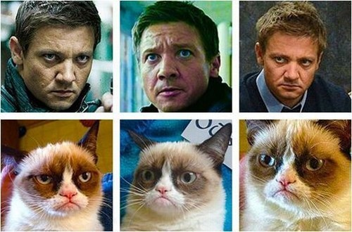 look alikes actors Jeremy renner facial expressions grumpy Grumpy Cat tard - 6770118144