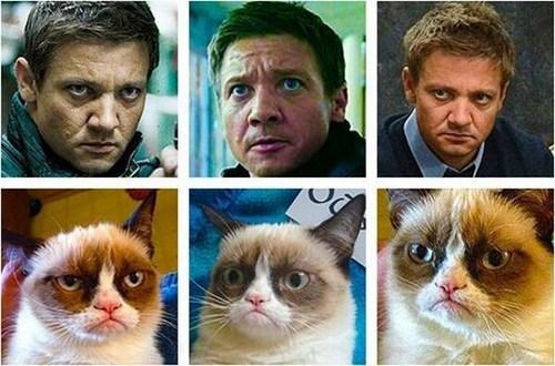 look alikes actors Jeremy renner facial expressions grumpy Grumpy Cat tard - 6770118144