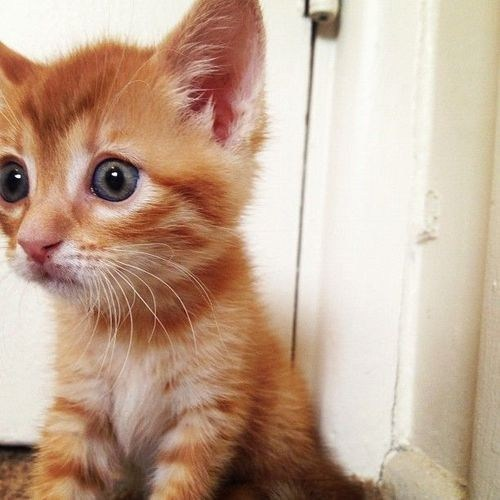 cyoot kitteh of teh day surprised kitten big eyes eyes wide eyed Cats - 6770145024