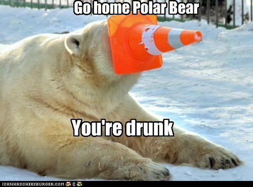 go home you're drunk traffic cone stuck polar bears - 6770258176