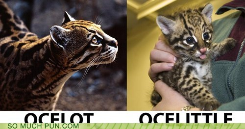 ocelots lot literalism double meaning suffix little - 6770338304