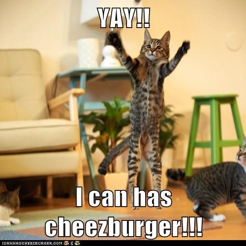 Cheezburger Image 6770367488