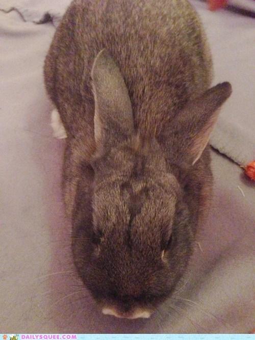 Bunday heart reader squee pet rabbit bunny squee - 6770617600