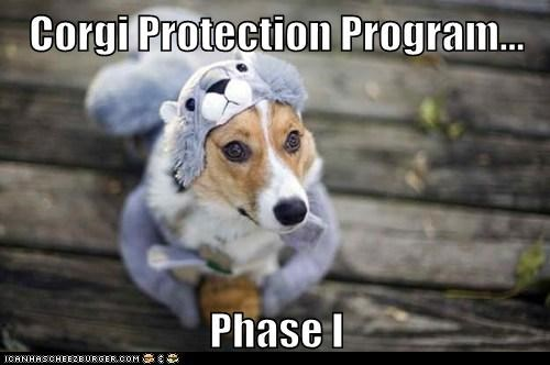 Corgi Protection Program...  Phase I