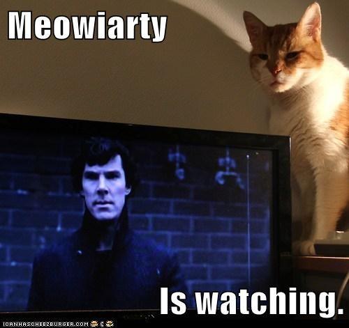 captions sherlock holmes TV Sherlock moriarty Cats reference - 6770889984