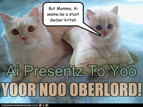 Ai Presentz To Yoo YOOR NOO OBERLORD! But Momma, Ai wanna be a stunt dwiber kitteh