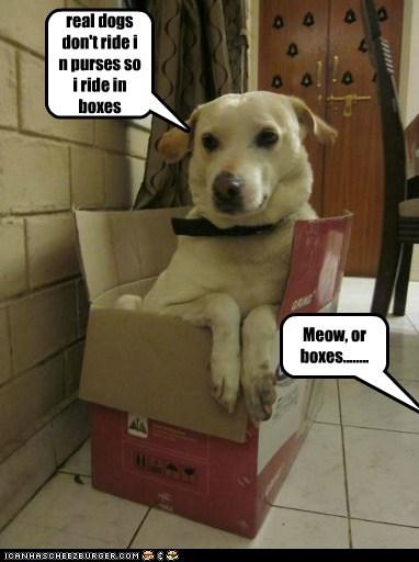 real dogs don't ride i n purses so i ride in boxes Meow, or boxes........