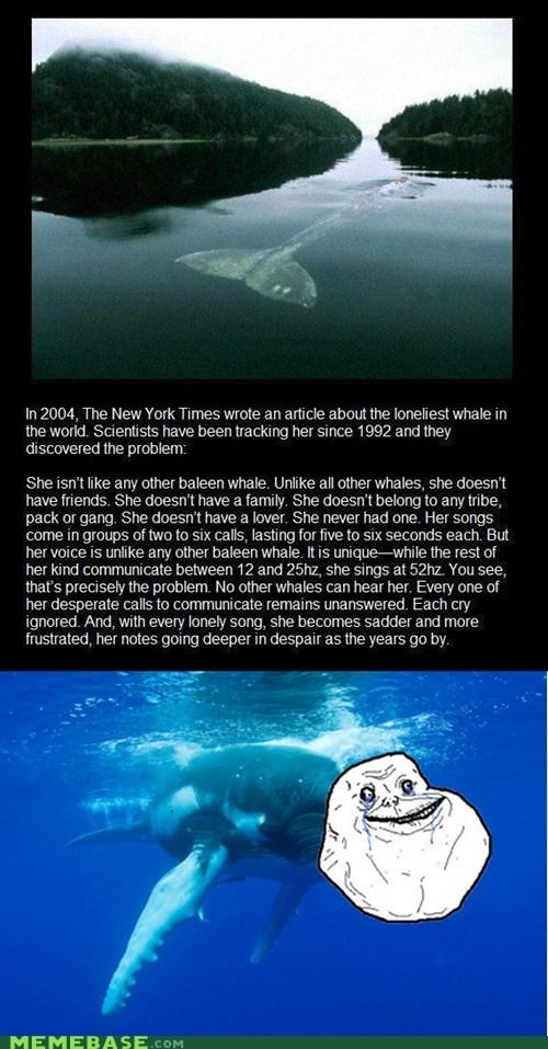 saddest forever alone baleen whale basically deaf - 6772444160