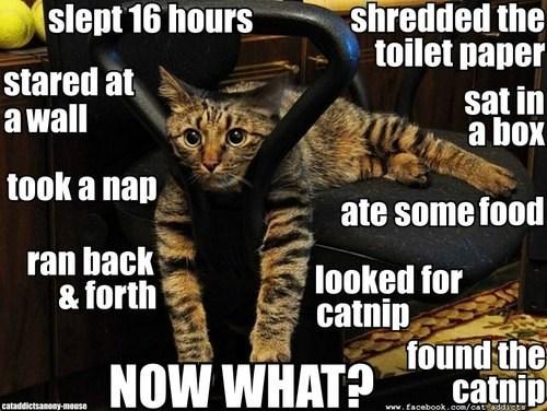 behavior life catnip captions sleep busy bored Cats - 6772780288