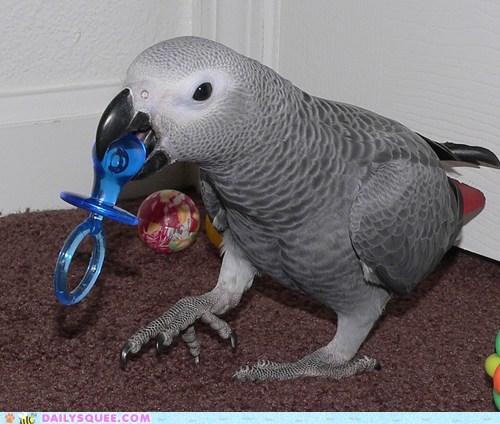 reader squee pet binkie bird squee parrot