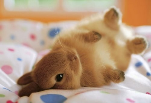 Bunday tiny tumble rabbit bunny squee - 6773090816
