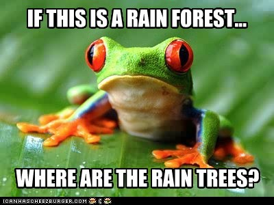 rain forest,trees,philosophy,where,frogs